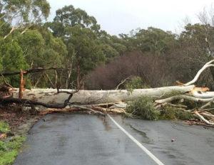 emergency tree removal leeds