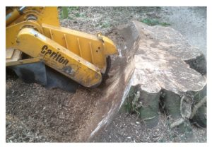 tree stump grinding leeds