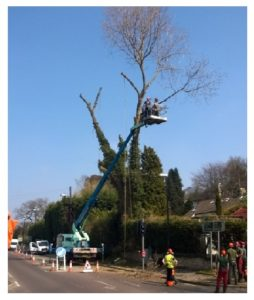commercial tree removal leeds